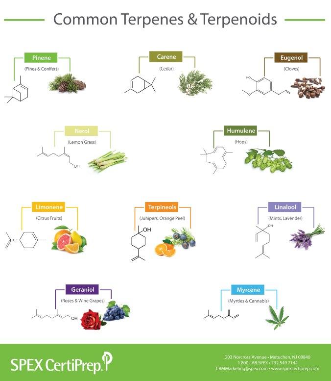 Terpene-Infographic