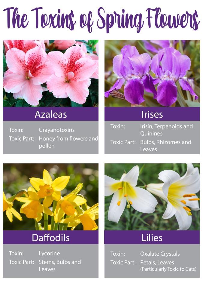 Toxins of Spring Flowers